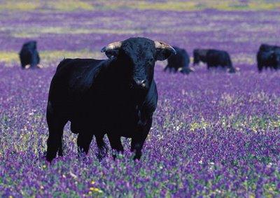 20100730013721-hay-que-dejar-a-los-toros-en-el-campo-y-no-abocarlos-al-suplicio-de-las-corridas.jpg